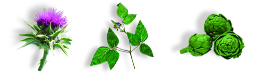3 plantas