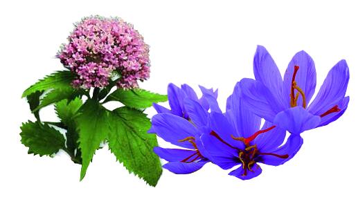 Valeriana y azafrán